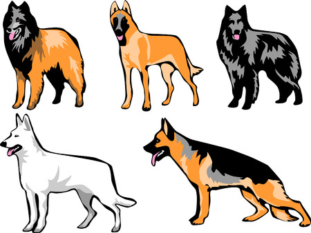 shepherd dogs Vector