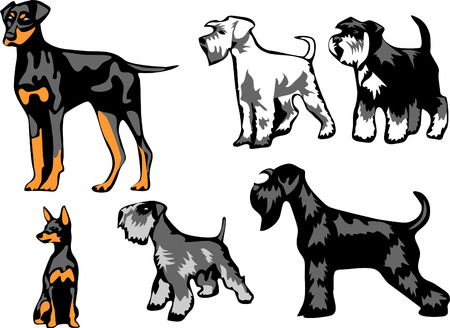 pinscher: pinschers and schnauzers Illustration