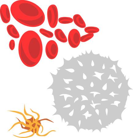 globulos blancos: células de la sangre
