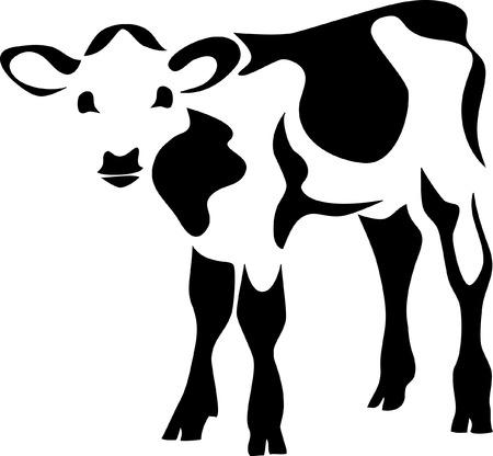 calf cow: calf