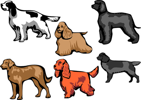 cocker: spaniel dog breeds