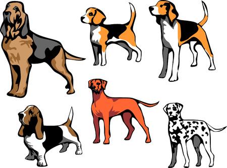 hound dog breeds Vector