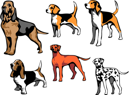 bloodhound: hound dog breeds