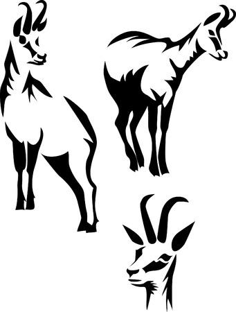chamois stylisés Vecteurs