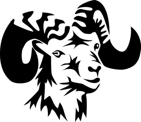 mouflon: head of ram