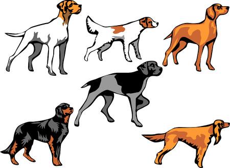 hounds: pointer dog breeds
