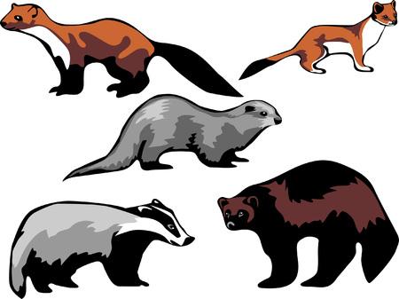 gronostaj: Europejska Mustelidae - kuna, wydra, gronostaj, borsuk i rosomak Ilustracja