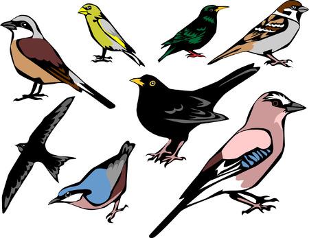 eurasian: european birds