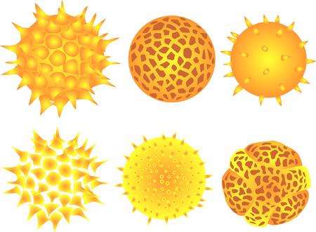 les grains de pollen Vecteurs