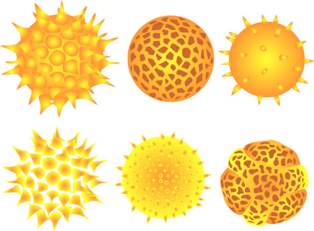 with pollen: pollen grains