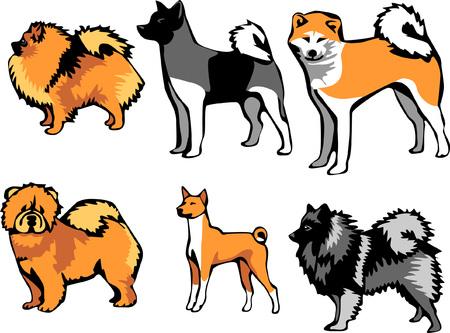spitz type dog breeds Illustration
