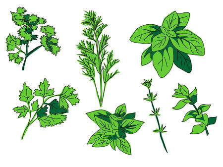 thyme: herbs - spice