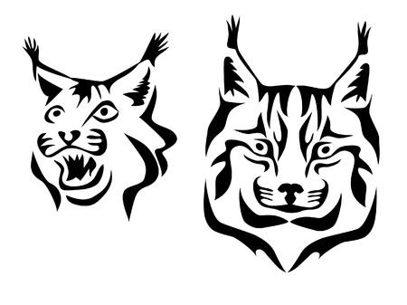 bobcat: head of lynx