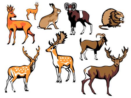 fallow deer: european mammals Illustration