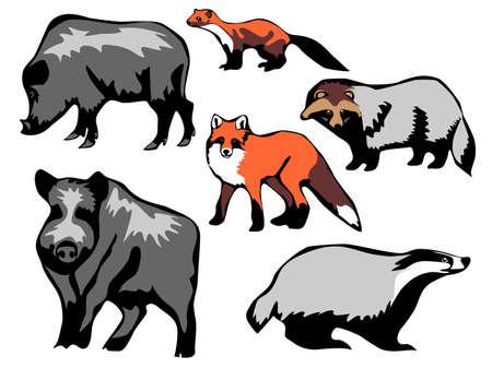 badger dog: european mammals Illustration