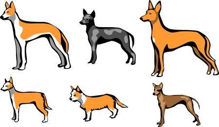 hairless: podengo and hairless dog
