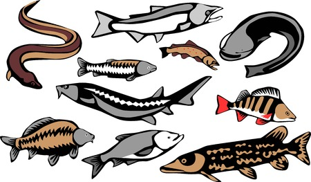 asp: european frehwater fishes Illustration