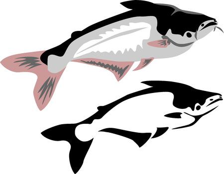 pangasius: pangasius fish Illustration