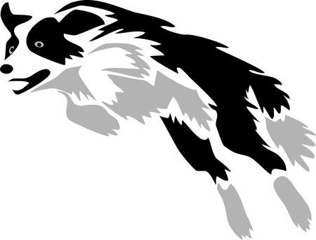 pastor de ovejas: Collie saltando fronteras Vectores