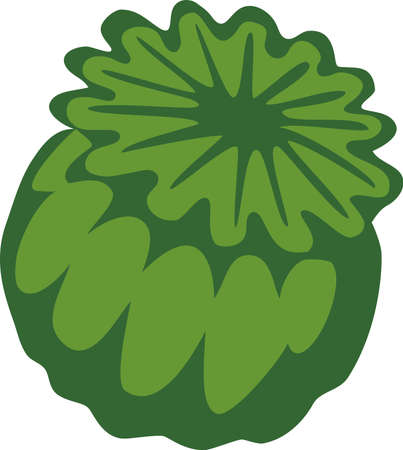 opium poppy: poppy head - two colors illustration Illustration