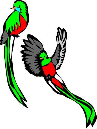 resplendent: Resplendent quetzal