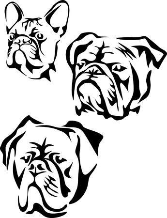 Bulldog Kopf - Französisch, Englisch, amerikanisch