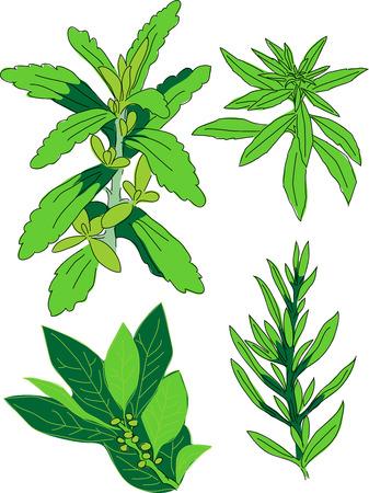 Stewia, cytryna werbena, położyć liść, estragon Ilustracje wektorowe