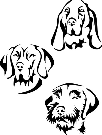 Head of hunter dog