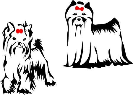 yorkshire: Yorkshire terrier - stylized illustration