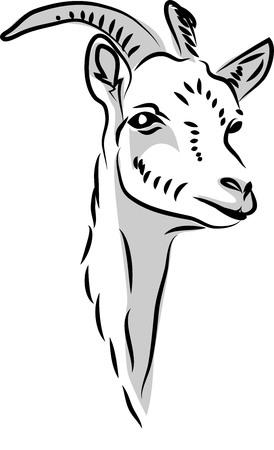 Head of horned goat