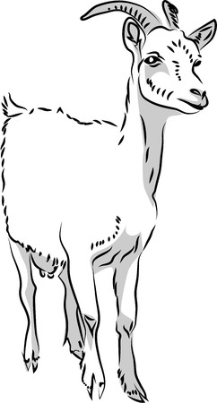 goat cheese: White horned goat Illustration
