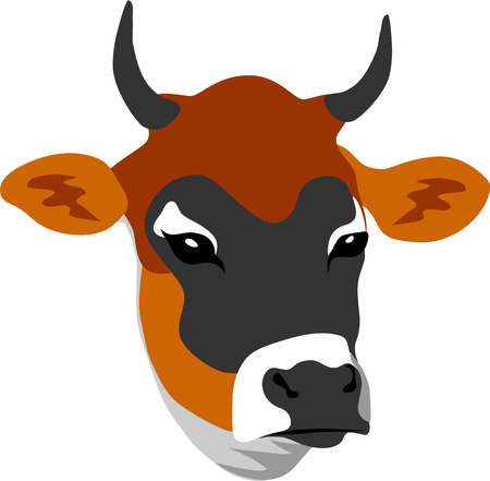 jersey cow: Jersey cow head