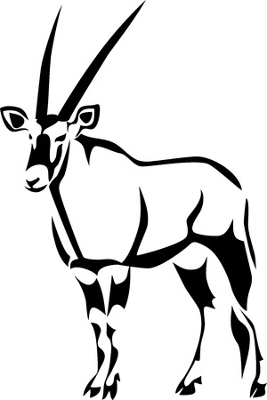 gazelle: Gemsbok - oryx gazelle