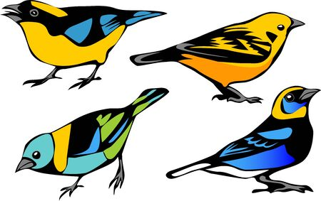 perching: Tanagers - color vector illustration Illustration