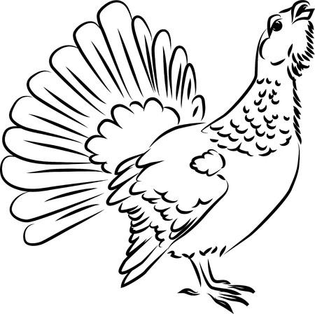 heather: Wood grouse