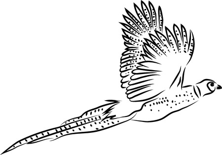 Ring necked pheasant flying Illustration