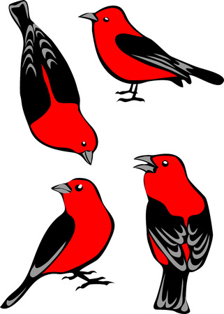 finch: Scarlet Tanager