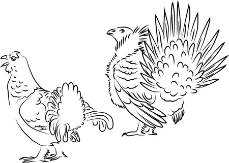 greater: Black grouse Greater sage grouse and Illustration