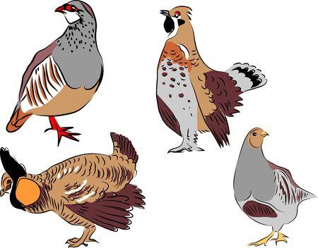 kuropatwa: red legged partridge, hazel grouse