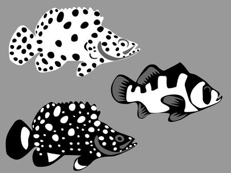 epinephelus: Panther grouper Illustration