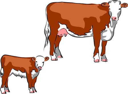 Hereford cattle Stock Vector - 78914970