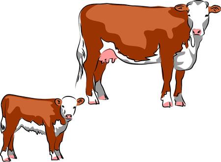 Hereford vee Stock Illustratie