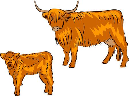 Hooglanders Stock Illustratie