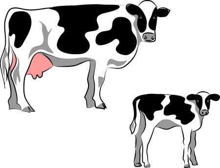 Holstein cow with calf