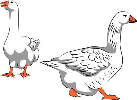Goose - vector illustration Ilustração
