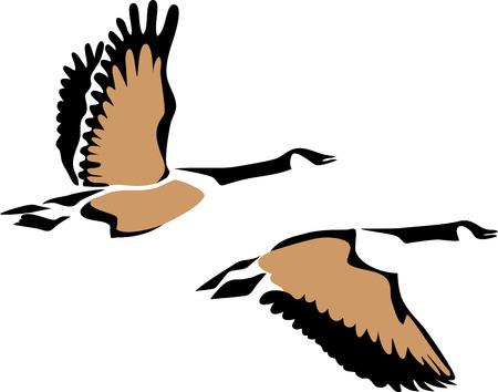 Canada goose Vettoriali