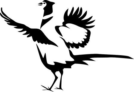 Pheasant - stylized on white background, vector illustration.