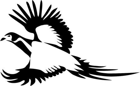 Ring necked pheasant flying, vector illustration.