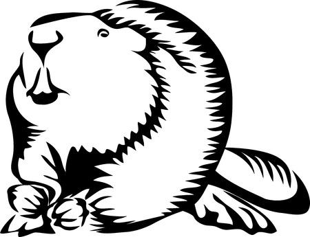 Beaver - stylized illustration Ilustração