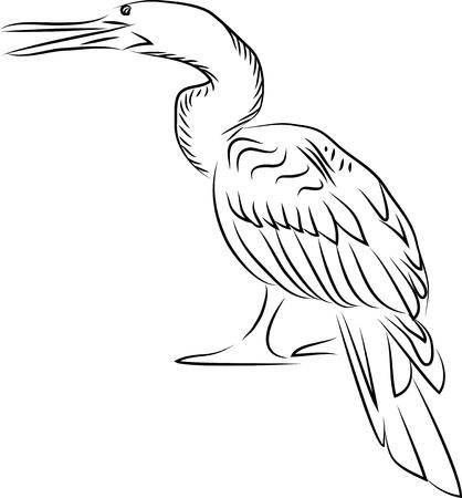 Anhinga. Vector illustration Ilustração